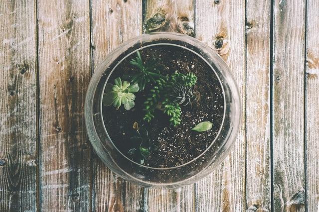 Plante les racines de ton activité